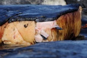 The subcutaneous fat of the Bowhead whale fin (Muktuk).